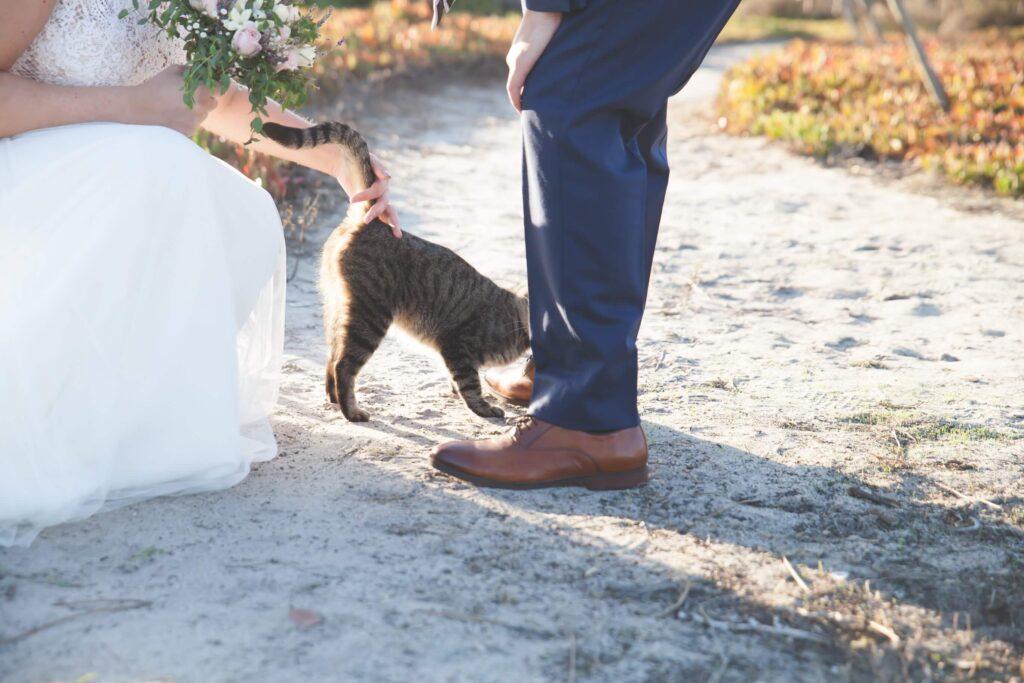 Para Młoda przed ślubem bawią się z kotem
